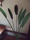 2009_0619hibi0007_2