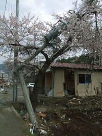 2011_0428hibi0030
