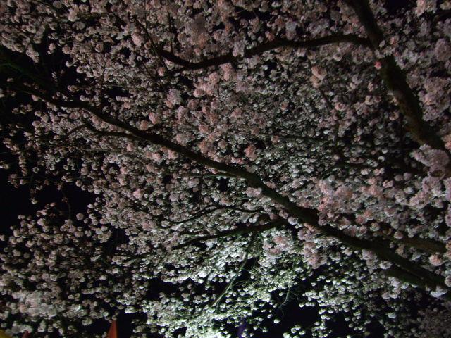 2010_0406hibi0007
